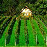 Conseils pour bien vendre son domaine viticole