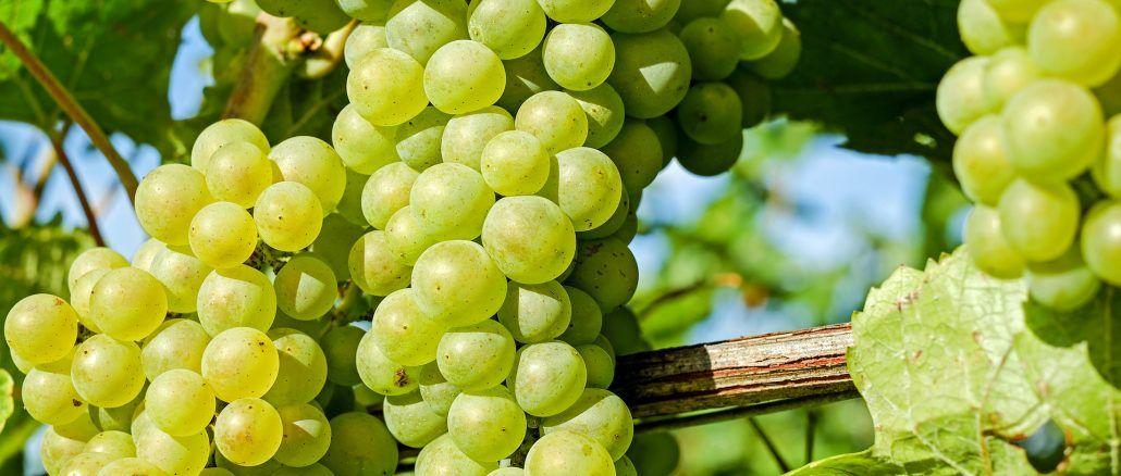 extrait de pépin de raisin