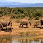 Voyager autrement en Afrique du Sud