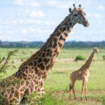 Les principales raisons de passer un séjour touristique à Nairobi