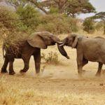 Séjour en Afrique du Sud : vivre des vacances incomparables